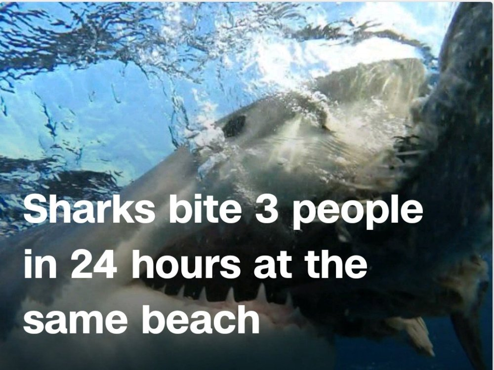 Sharks bite 3 people in 24 hours at the same Florida beach