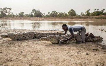 crocodile4